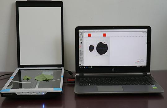 JC-FS1000叶片图像分析仪